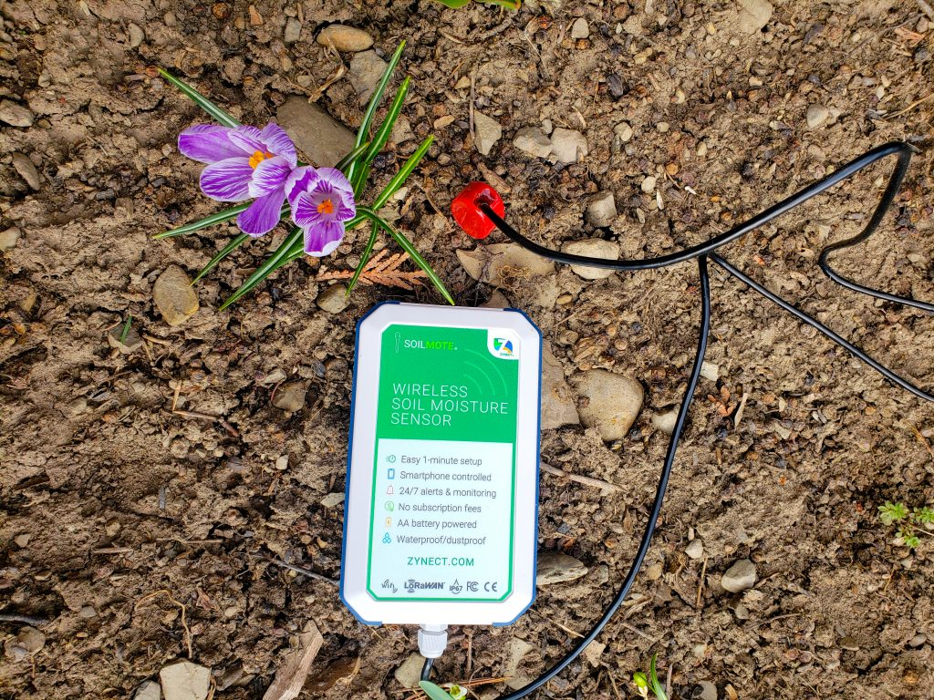 Soilmote with a Crocus